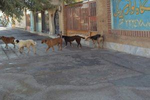 رژه سگ ها