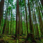 هیاهوی جنگل