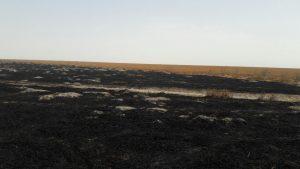 آتش سوزی در تالاب هامون